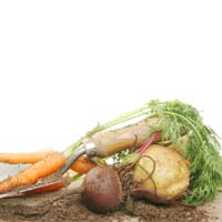 Root Vegetables Benefits